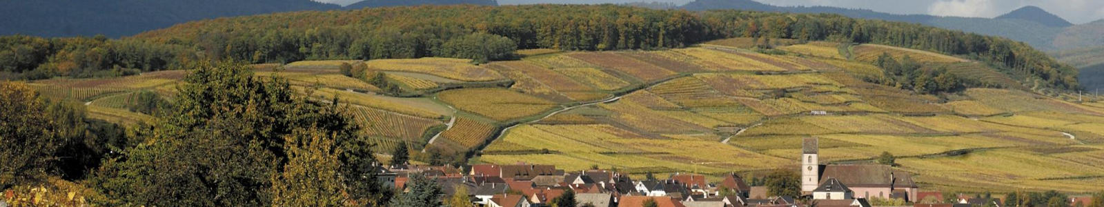 Alsace Grand Cru Pfingstberg